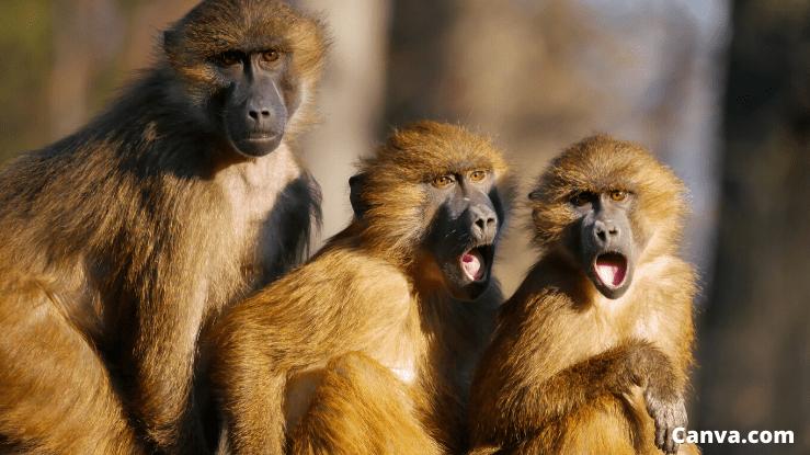 macacos-impressionados-com-jovem-que-ganha-dinheiro-extra-na-internet